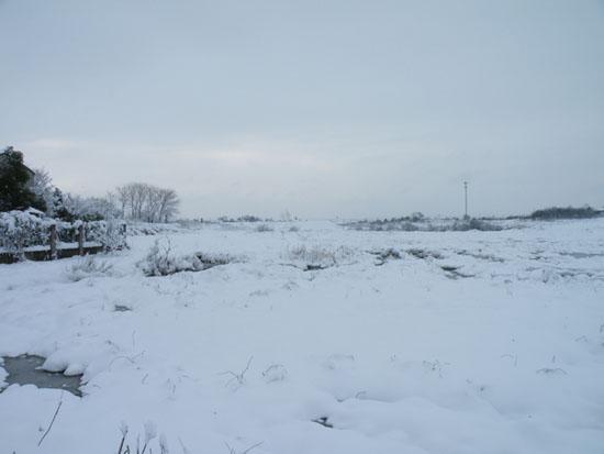 院子外的雪景,是一望无际吧,光光就是喜欢这种荒凉。