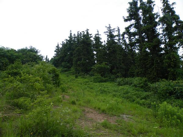 龙山之脊,让人有些失望,尽管有条防火带,但是两边的植被太繁茂了。