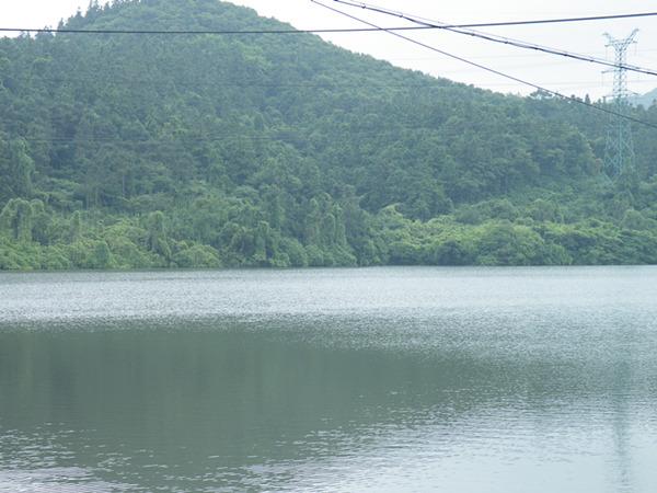 龙山水库对面的龙山,满是爬山虎,像是飘在水面上一样。